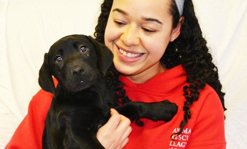 Careers at the Animal Rescue