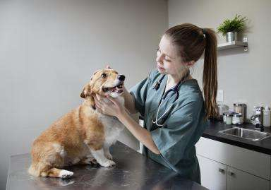 dog careers high paying